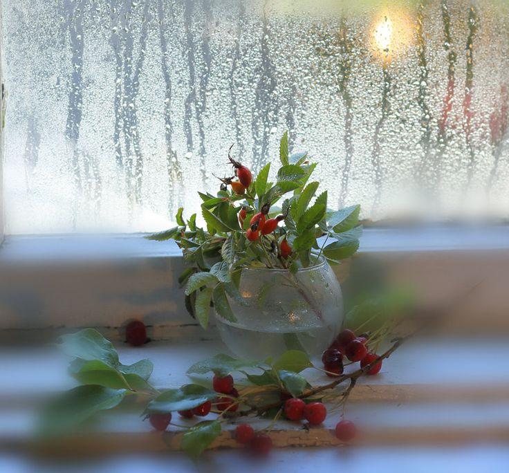 разбитое стекло цветок боке натюрморт: 8 тыс изображений ...