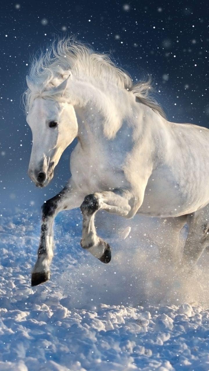 White Horse Run Mammal Portrait 720x1280 Wallpaper Horse Wallpaper Animal Wallpaper Animals