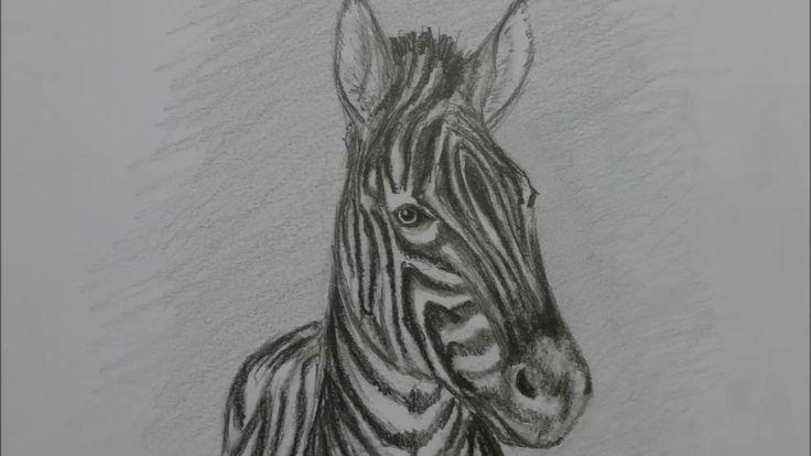 Zeichnung eines Zebra. Рисунок Зебры