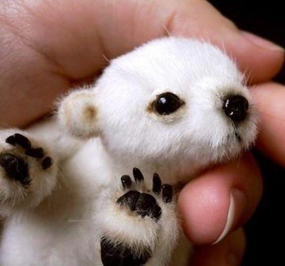 Baby polar bear! so cute!So Cute, Polar Bear Cubs, Polarbear, My Heart, Baby Animals, Baby Polar Bears, Cute Babies, Polar Bears Cubs, Adorable Animal