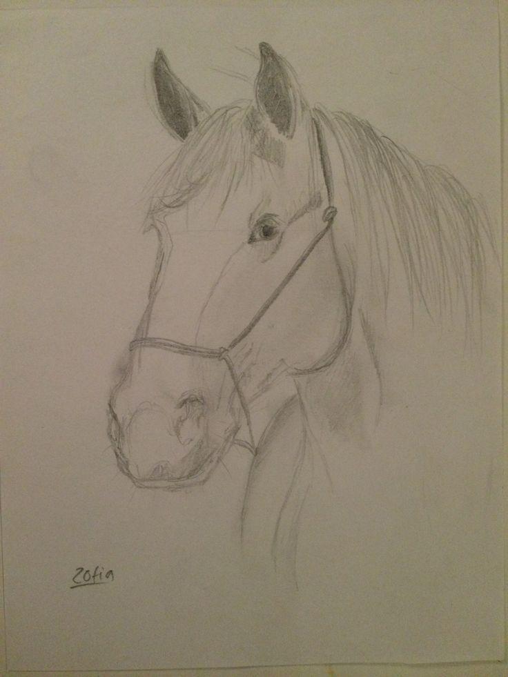 Quick pencil sketch of a horse