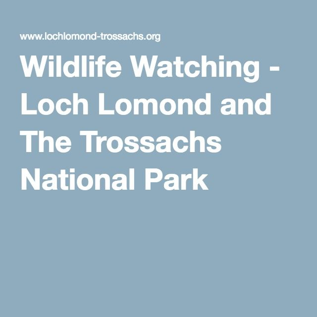 Wildlife Watching - Loch Lomond and The Trossachs National Park