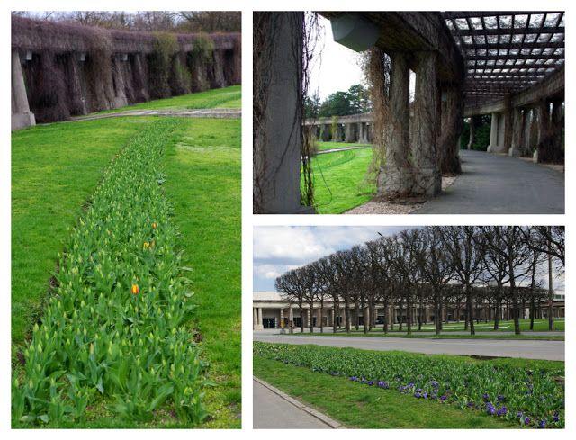 ogrodowe tu i tam: kwietniowo w Parku Szczytnickim