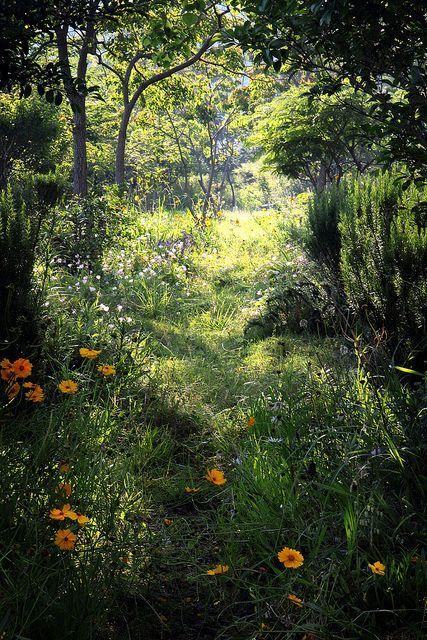themagicfarawayttree:forest sunlight