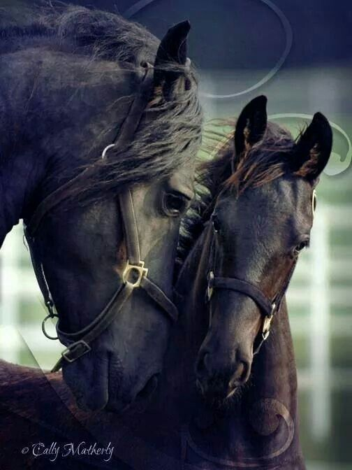 Black Horse mom and her beautiful foal <3