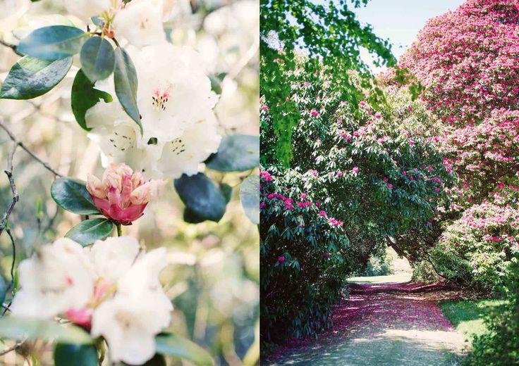 Res och upptäck engelska trädgårdar