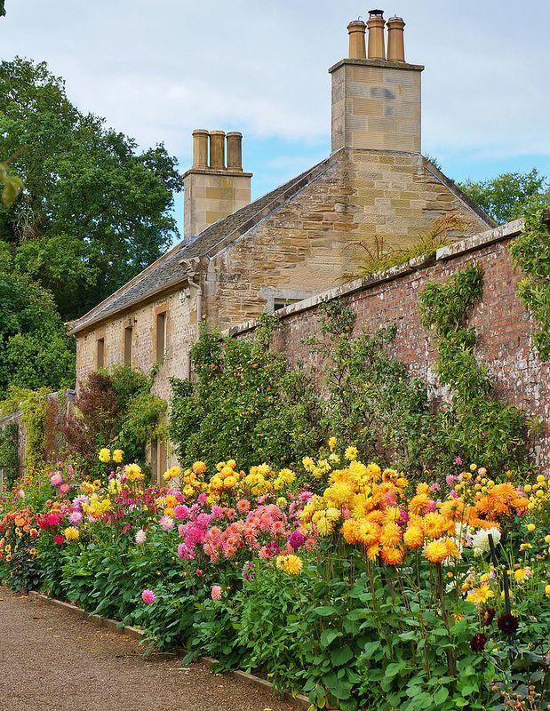 Garden Ideas Scotland the 25+ best dahlia garden ideas ideas on pinterest | dahlias