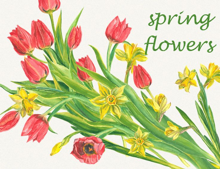 spring flowers, tulips clipart, narcissus, watercolor