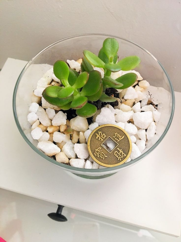 Perfect Housewarming Gifts The Jade Plant Iis A Good Luck Symbol For Money In Jade Plants Feng Shui Tips Feng Shui Plants
