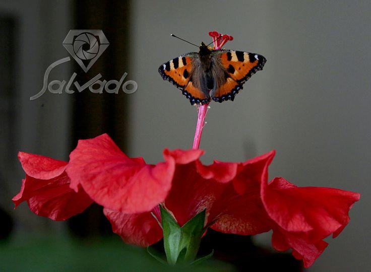 zapraszam do mnie i mojego męża na bloga http://salvadofotografia.blogspot.com/search/label/mieszka%C5%84cy