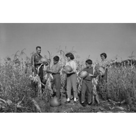 Family with two boys and girl harvesting pumpkins Canvas Art - (24 x 36)