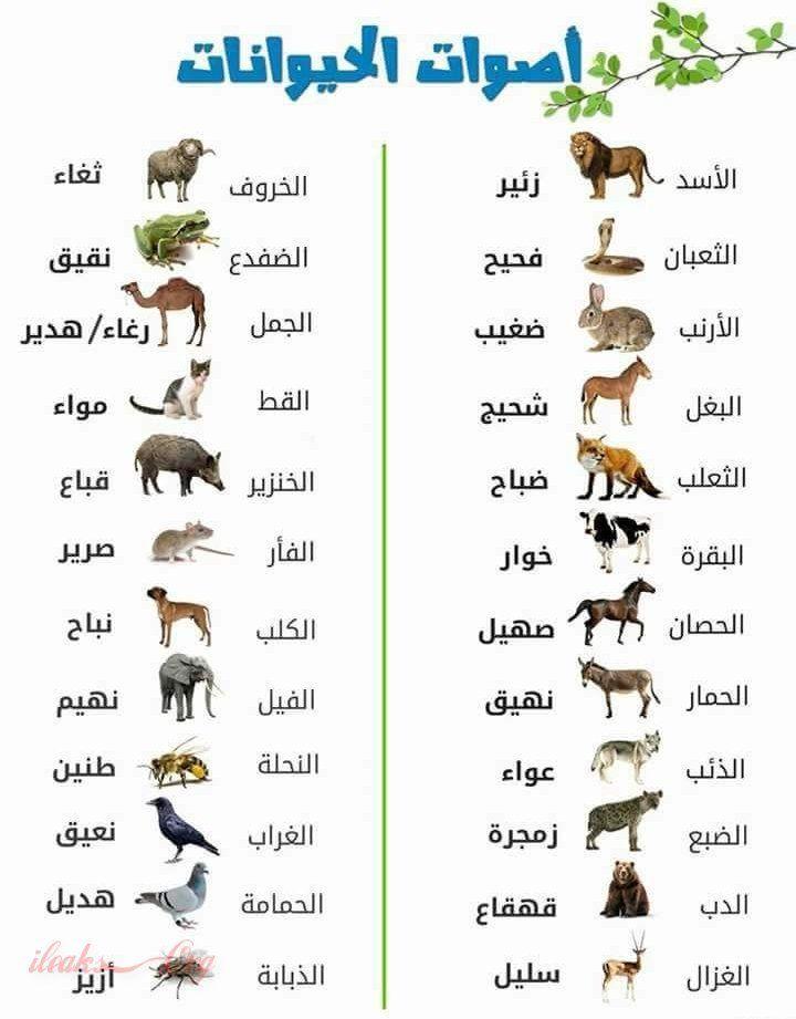 تعرف على اصوات الحيوانات و ماهي تسمية كل صوت Arabic Language Learn Arabic Online Learning Arabic