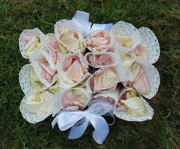 Cassettina petali
