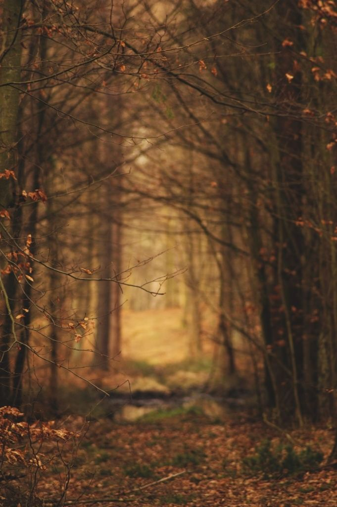 Magic of the Woods (by evelynkosater)