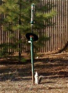 1000 Ideas About Squirrel Baffle On Pinterest Squirrel