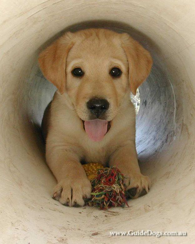 Fine Pupper Mature Blonde