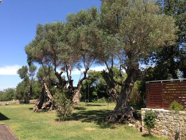 Green beautiful garden around villa Lucia!  New taken photos 15/5/2013!      http://villa-lucia.gr/