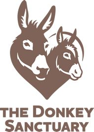 Free to visit and close by. The beautiful Donkey sanctuary