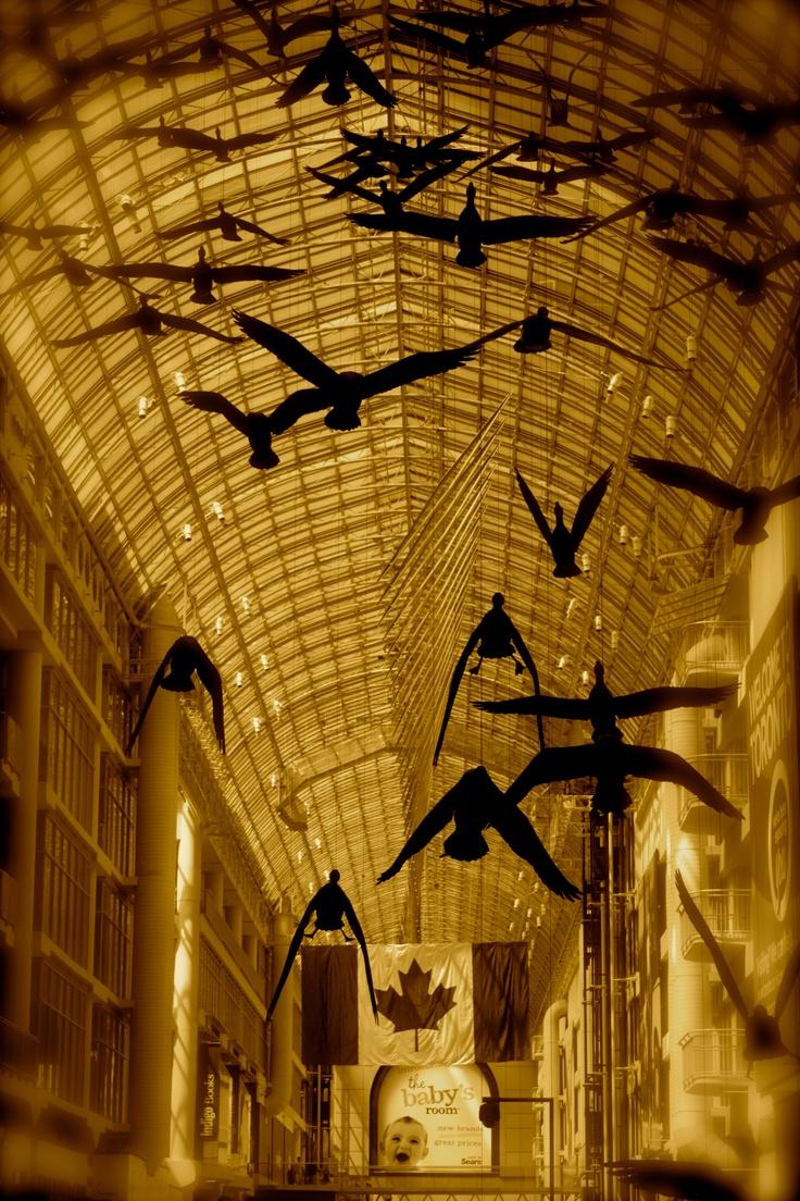 Birds at Eaton Center...