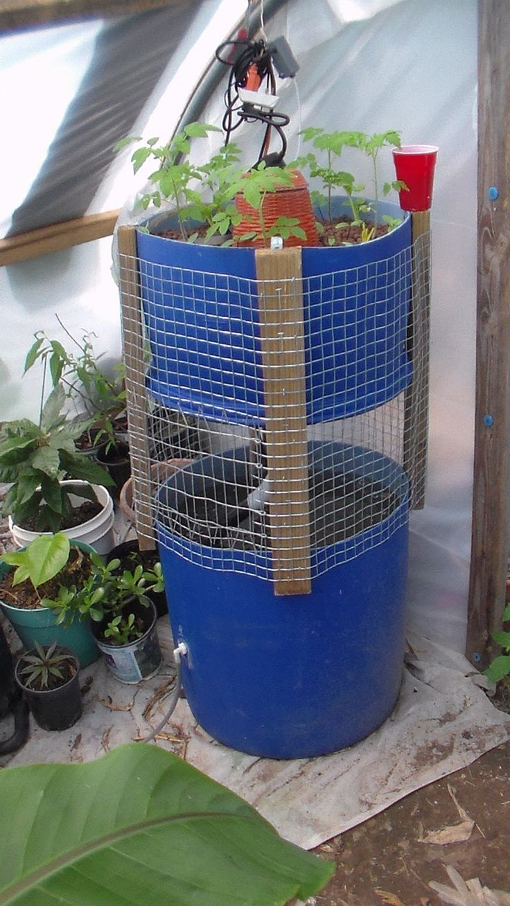155 best images about hydroponic tower garden on pinterest for Best fish for hydroponics
