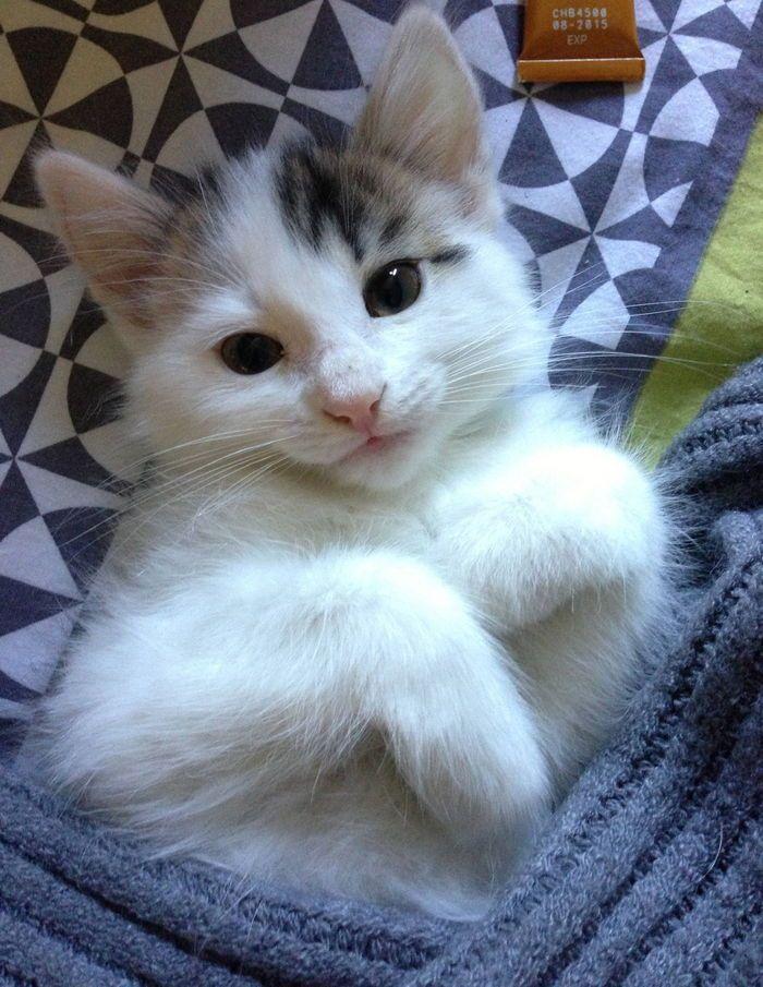 Nahla on www.yummypets.com Cat, kitten, kitty, meow, purr, pets, animals, pussycat, Yummypets