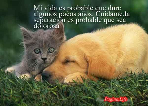 Frases Reflexion De Amor Por Perros Y Animales 4 Pagina Life