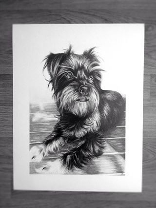 Pistachio the dog drawing. Amy Peters-Artist Facebook