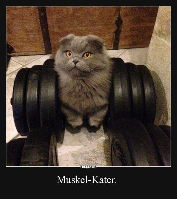 Muskel-Kater. | Lustige Bilder, Sprüche, Witze, e…