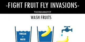 WAYS TO FIGHT FRUIT FLY INVASIONS