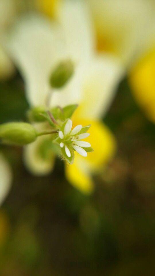 [P]七北田公園にて。大きな花の中に紛れて小さく咲く花。うまく説明できないですが、健気さのようななにかを感じて撮ってみました。スマホ用の接写レンズをつけて撮影してます。
