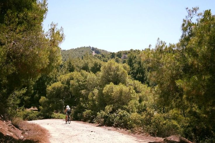 While you are at @portocarras for your Easter vacation, you can enjoy a bike ride through the evergreen forest!   #PortoCarras #outdooractivities #outdoor #activities #forest #Greece #Halkidiki #Sithonia #bike #bikeride #bikestagram #vacation #nature #naturelover