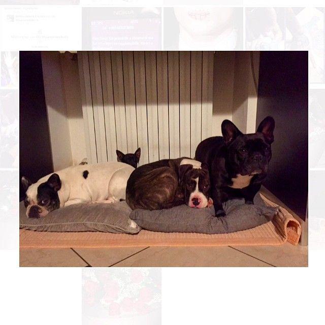 #ElenaGrimaldi Elena Grimaldi: Ritratti di famiglia con Batman sullo sfondo che protegge il gruppo! #camilla #Matilde #vale #primo #ioete #pugno #elenagrimaldi #home #family #love #dog #frenchbouledogue #amstaff #new