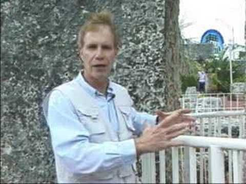 Mystery At Coral Castle