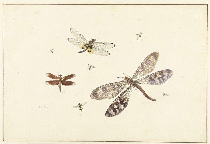 Drie libellen en vijf kleinere insecten, Johannes Bronkhorst, 1658 - 1726