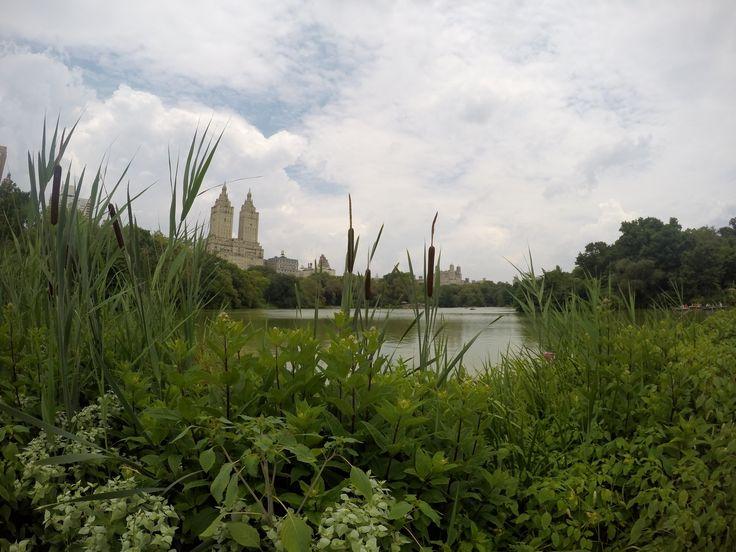 Central Park #Ny #centralpark