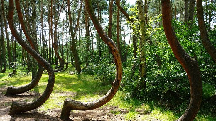 Crooked Forest Tourism, Poland