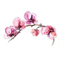 orchid watercolor - Buscar con