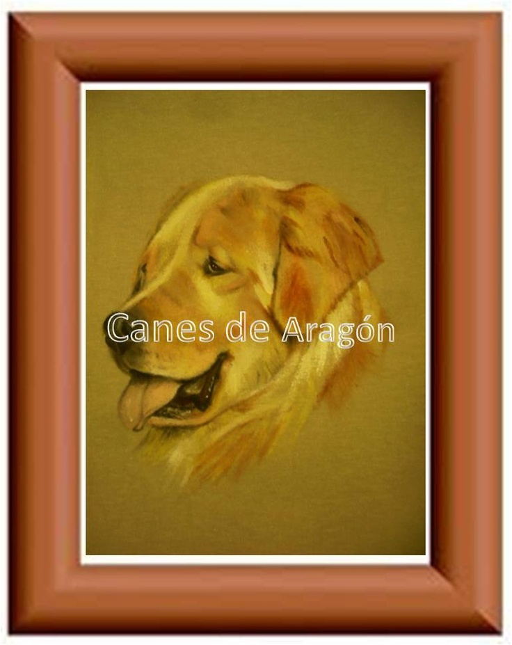 Retrato de mascotas. Golden Retriever. Autor: Alexander Restrepo González. Medellín-Colombia. Pintura de mascotas por encargo.