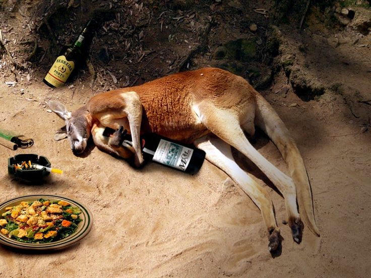 Funny Images of Australia  Kangaroo HD Pictures Wallpapers.Here some Kangaroo Funny Wallpapers and HD Images ,Very funny Pictures of Kangaroo