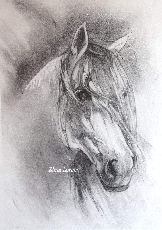 White Horse Original Drawing Room Decor Horse Art por sublimecolors