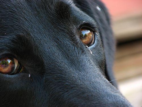 If the dog barks and destroys the house when he is alone .....  Se il cane abbaia e distrugge casa quando è solo.......
