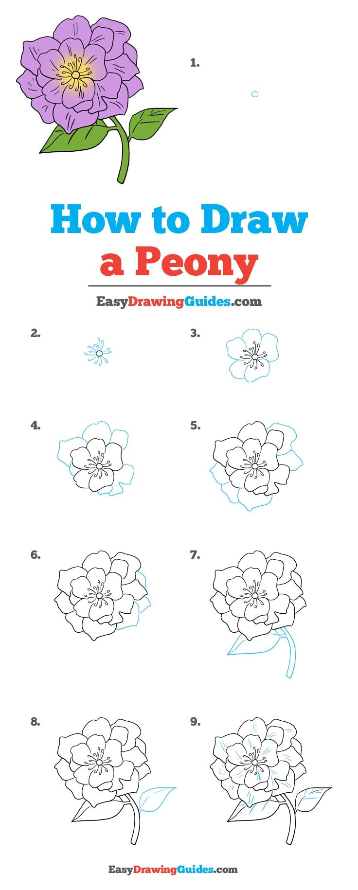 How to Draw a Peony   Really Easy Drawing Tutorial   Easy flower ...