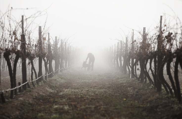 Best's is known for cool climate Shiraz. Even though it does get very warm in summer, it cools off at night and can be very chilly during the winter months