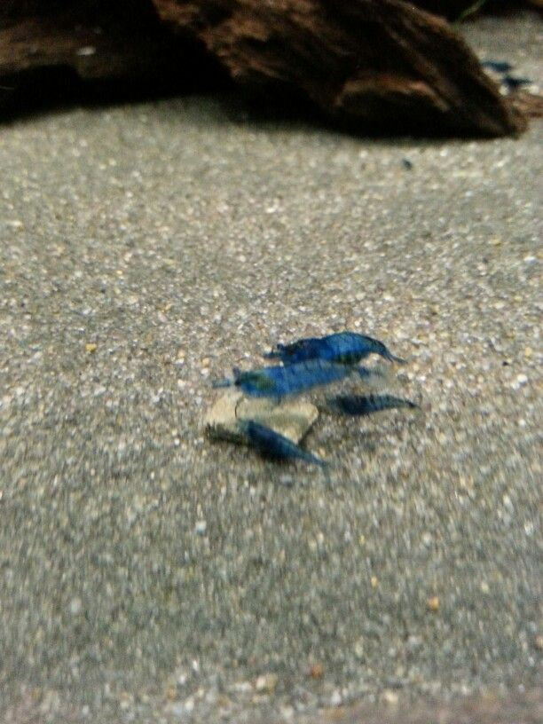 nice blue neos