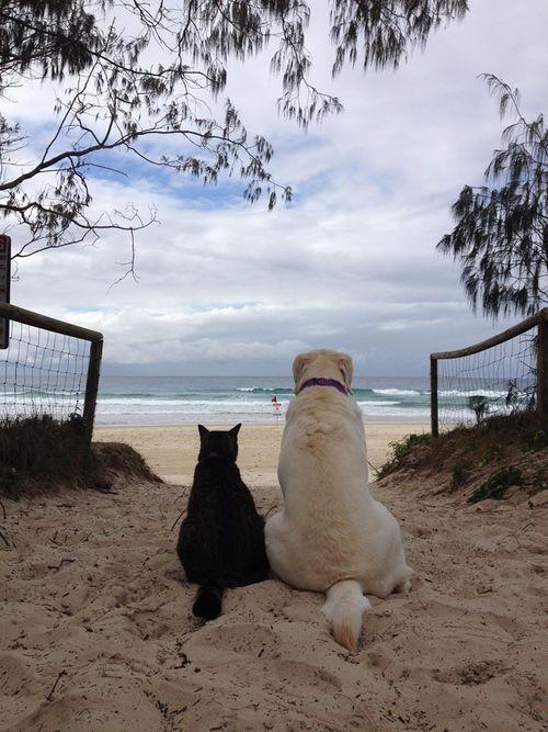 Amizade à beira mar