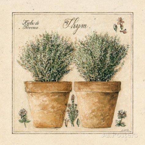 Herbes de Provence III (Laurence David)