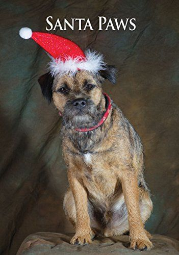 Border Terrier Christmas Card. Large A5 Seasonal Greeting Card with Scarlet Envelope. Perfect for Dog Lovers CSP http://www.amazon.com/dp/B0155H5XV8/ref=cm_sw_r_pi_dp_zNrpwb1ENKBST