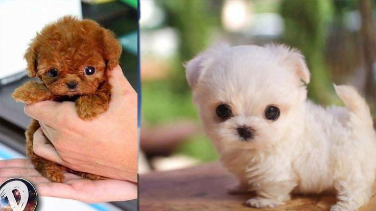 Resultados de la búsqueda de imágenes: imagenes de perritos tiernos bebes - Yahoo Search Results Yahoo Search