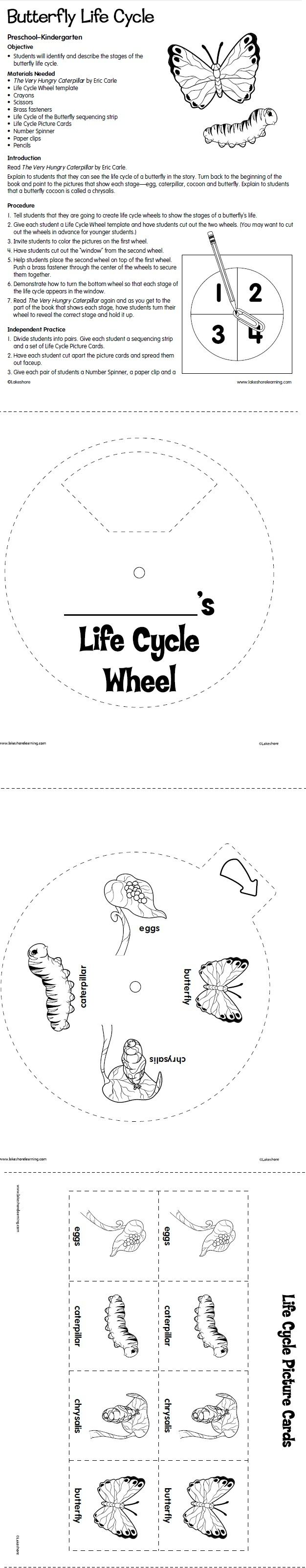 The 25 best moth life cycle ideas on pinterest spring cycle butterfly life cycle lesson plan from lakeshore learning robcynllc Gallery