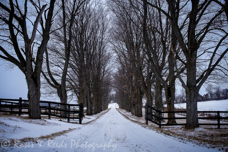 So atmospheric! I just love the tree canopy and the symmetry.